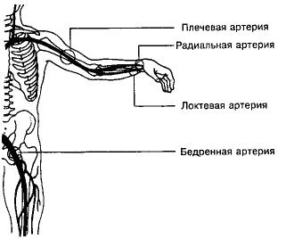 Точки пальцевого прижатия артерий